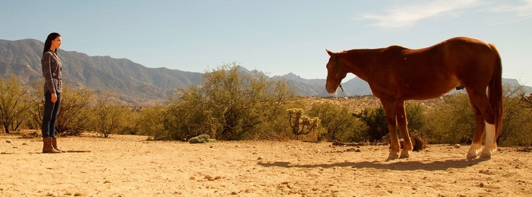 Scottsdale Recovery Equine Therapy for Addiction Treatment in Arizona