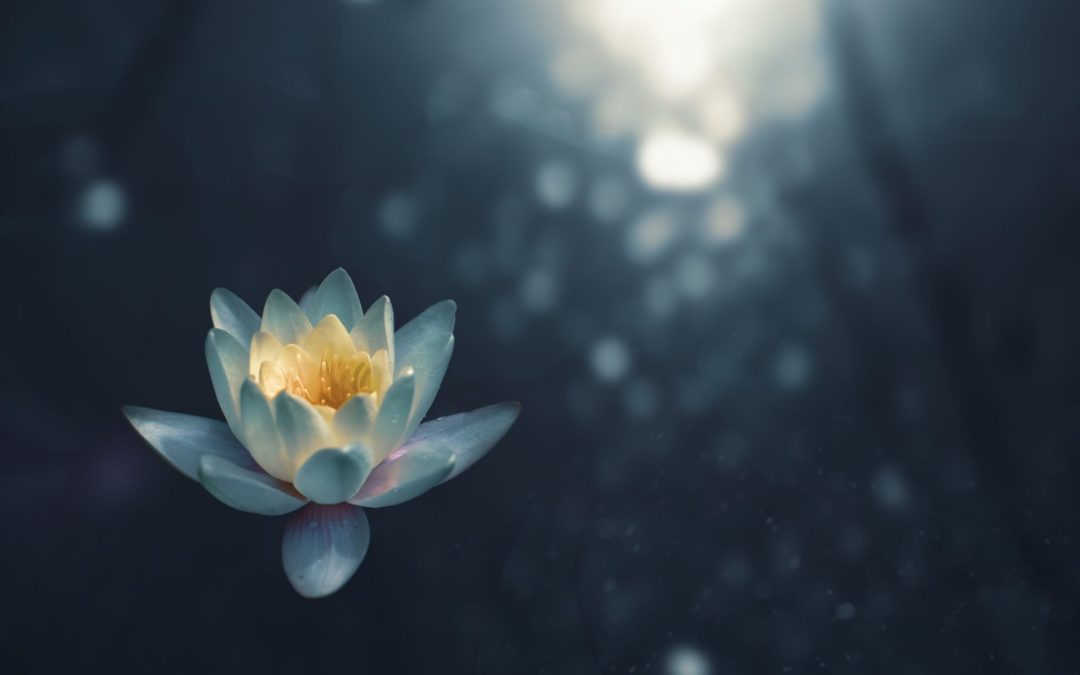 Meditation and Other Forms of Self-Care